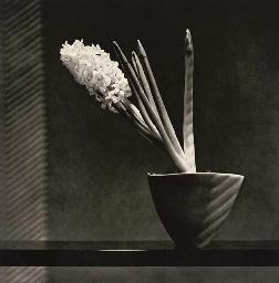 Hyacinth, 1987