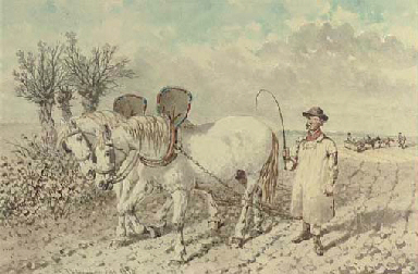 A labourer with a ploughing te