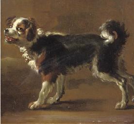 'Een Kooikerhond'