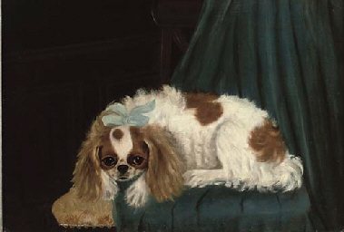 A King Charles Spaniel on a ch