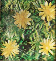 Flowers - Project for Rain Mac