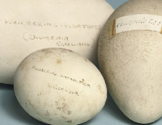 Five eggs collected on the Terra Nova expedition