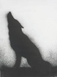 Coyote (E. 169)