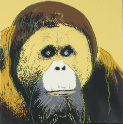 Orangutan, from Endangered Spe
