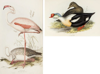 GOULD, John (1804-1881) The Birds of Europe London: Richard ...