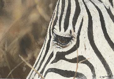 White and black stripes