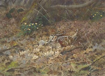 Nesting woodcock