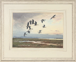 Greylag geese in flight, sunse