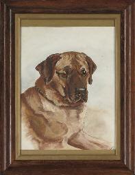 Study of hound