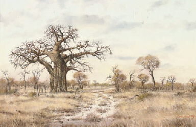The boab-tree