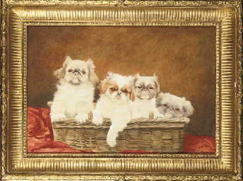 Four Pekingese dogs in a baske