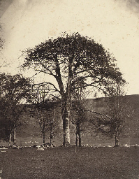 Tree study, 1854-55
