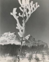 Wintermorgen St. Moritz