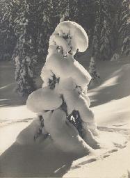 Winterzauber am Waldrand