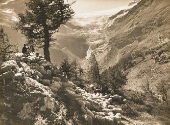 Schafhirte bei Alp Grüm