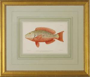 [Tropical Fish Studies]: Six P