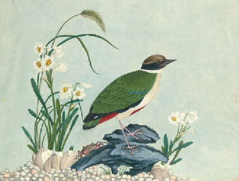 FIVE EXPORT PAINTINGS OF BIRDS