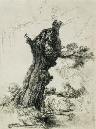 Saint Jerome beside a Pollard