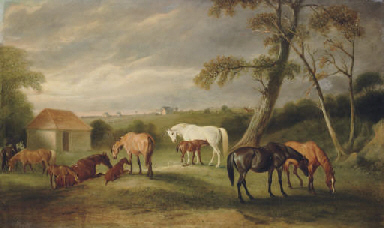 Mares and Foals in an Extensiv