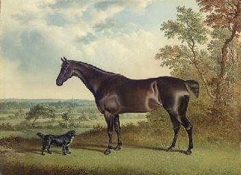 A Dark Brown Horse and a Spani