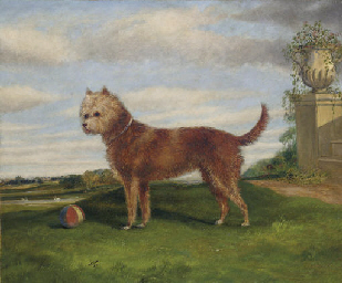 A Terrier with a Ball in an Ex