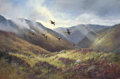 Red Grouse, Glen Garry