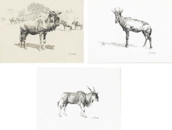 Gnu, or Wildebeest; Hartebeest