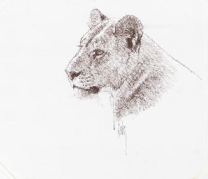 Head of a Lioness