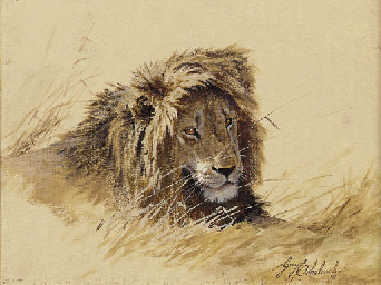 A Study of a Lion