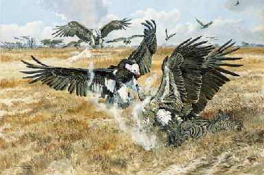 White-backed Vultures and Whit