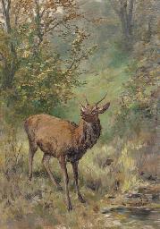 A Roebuck