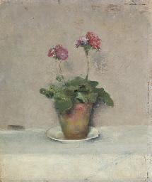 Primeveres roses dans un pot d