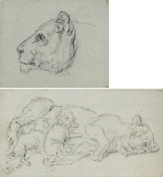 Une tête de lion vu de profil