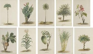 Dix-sept études de plantes rep