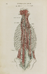GRAY, Henry (1825-1861). Anato