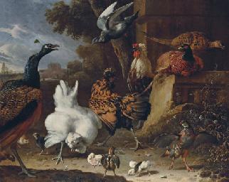 A cockerel, hens, chicks, a pa