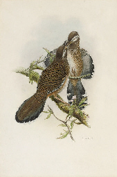 Illustrations to John Gould's