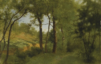 Sunlit wooded landscape