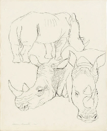 Studies of a rhinoceros