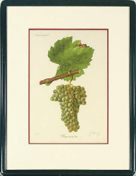 [Grapes]: Seven Plates