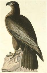 The Bird of Washington or Grea