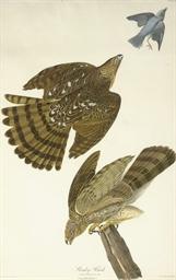 Stanley Hawk (Plate XXXVL) Fal