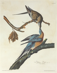 Passenger Pigeon (Plate 62)