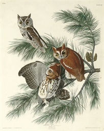Mottled Owl (Plate 97) Strix a