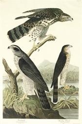 Goshawk and Stanley Hawk (Plat