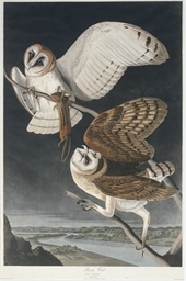 Barn Owl (Plate CLXXI) Strix f