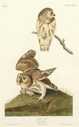 Little Owl (Plate CXCIX) Strix