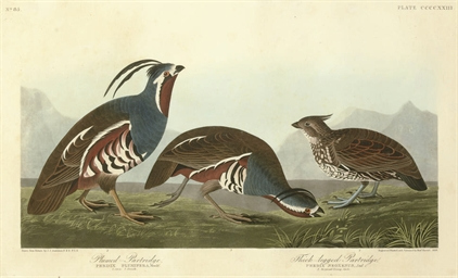 Plumed Partridge and Thick-leg