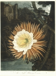 The Night-Blooming Cereus, fro