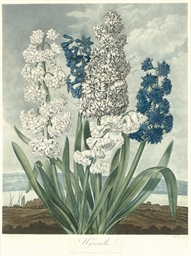 Hyacinths, from The Temple of